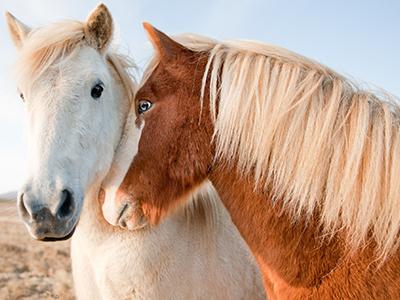 Pferde & Paddocks