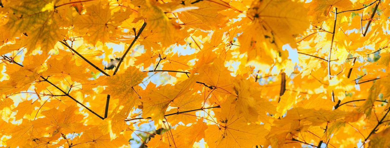 Herbst Sonderverkauf