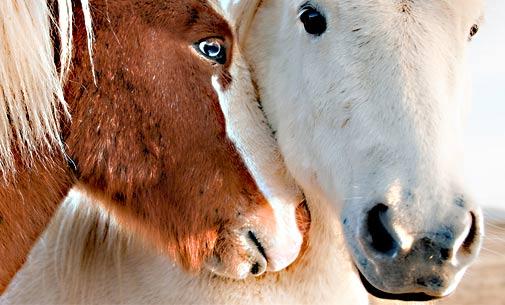 Tierhaltung & Stallbau